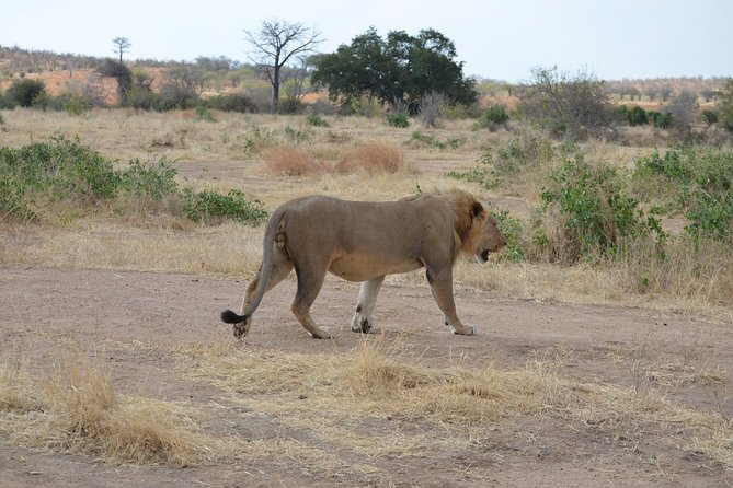 Ruaha National Park From Dar Es Salaam Flying Option 3 Days 2 Nights