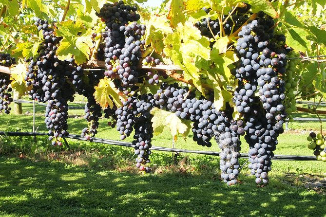 Solo Traveller Full Day Wine Gourmet and Scenic Delights Tour from Blenheim