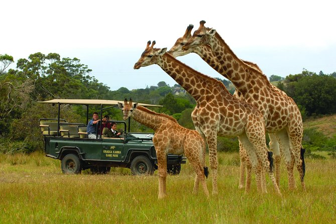 Guided drive with Giraffe