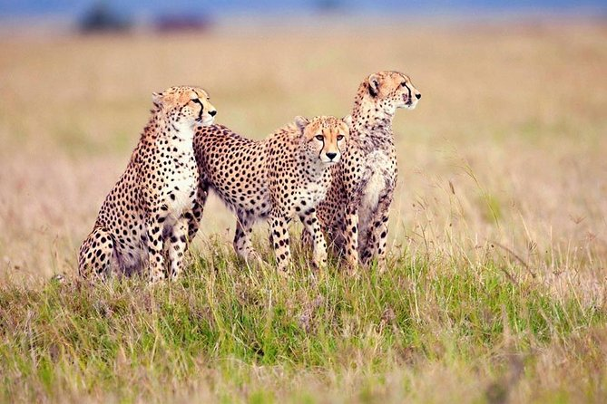 5days mid range Amazing Tanzania safari