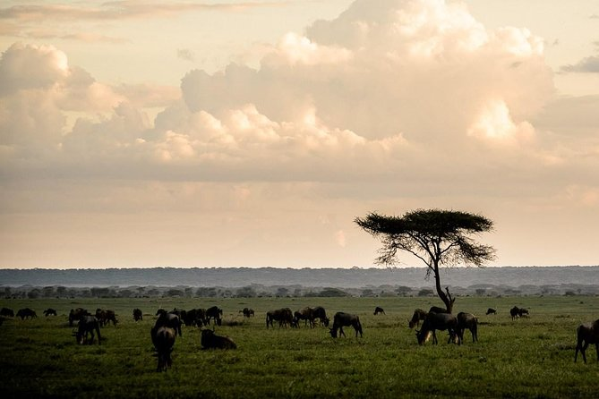 4 Days Tanzania lodging safari: Tarangire, Serengeti & Ngorongoro crater photo 3