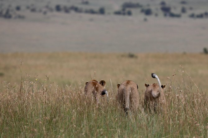 Nairobi National Park, David Sheldrick Elephant Orphanage, Giraffe Center Tour