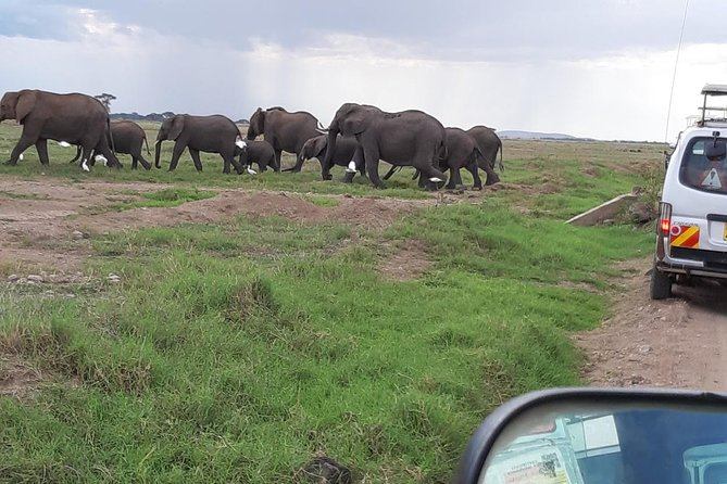 Tsavo East, Tsavo West and Amboseli Private Wildlife 5-Day Safari from Mombasa
