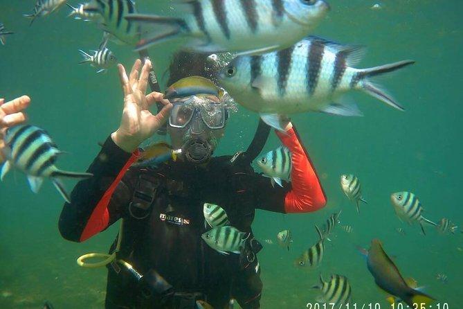 Kota Kinabalu P2 Private Island Scuba Discovery Tour + BBQ Lunch
