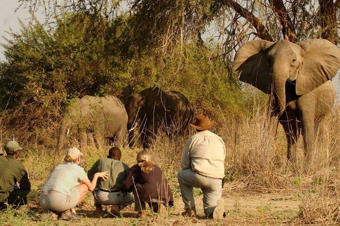 5 Days Murchison Falls National Park Safari Tour in Uganda