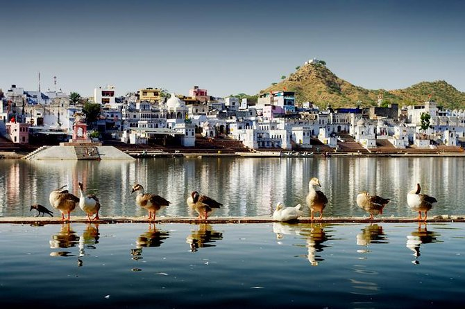 Jaipur- Pushkar Same Day Tour