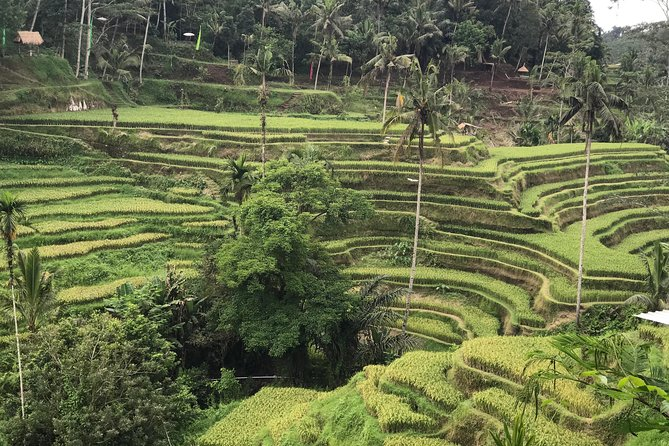 Ubud Surrounding Private Tour