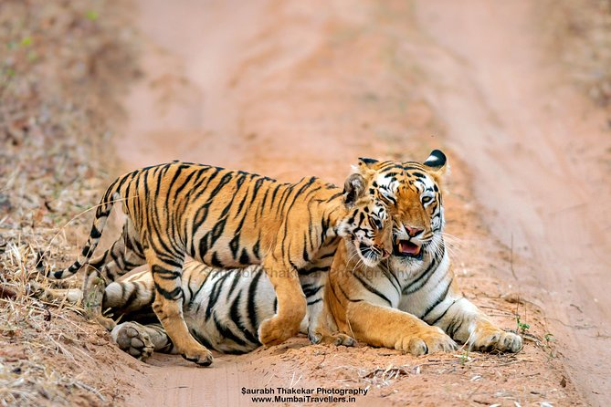 Two Night Tiger Safari Experience at Tadoba National Park &Transfers From Nagpur
