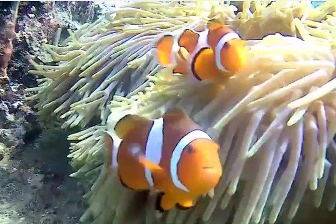Bali Blue Lagoon Tanjung Jepun Snorkeling Tour
