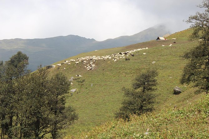 Bhrigu Lake Trek in Himalayas by The Countryside Travels