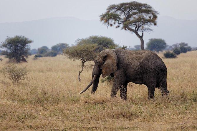 3-Day Short Safari in Tanzania's Northern Circuit