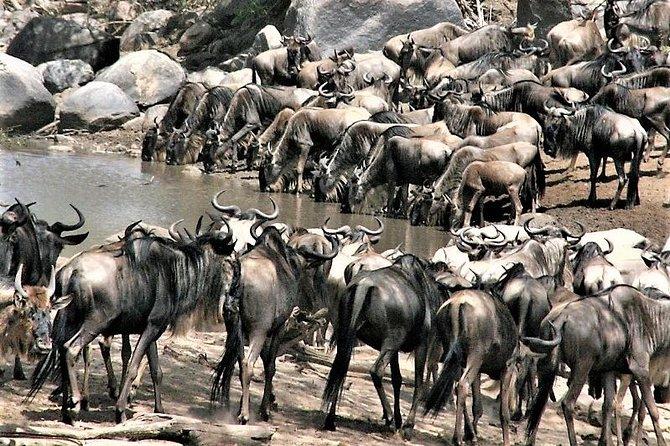 Twelve Days: Tarangire-manyara-ngorongor0-serengeti (classic)