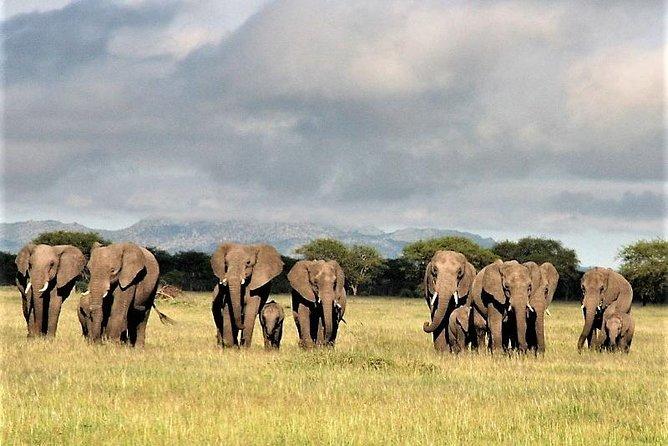 Four Days: Arusha-tarangire -ngorongoro (classic)