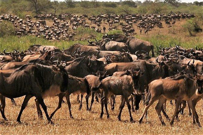 Eight Days: Tarangire-manyara-ngorongoro-serengeti (classic)