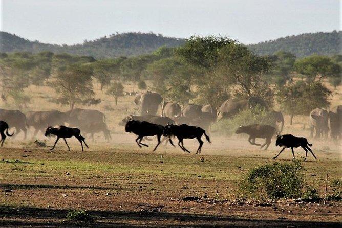 Nine Days: Tarangire-manyara-ngorongor0-serengeti (classic)