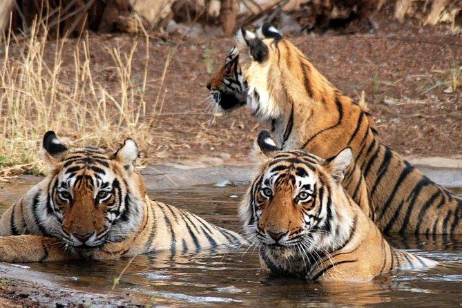 Taj Mahal, Agra, Jaipur and Ranthambore Wildlife Safari Tour from Delhi