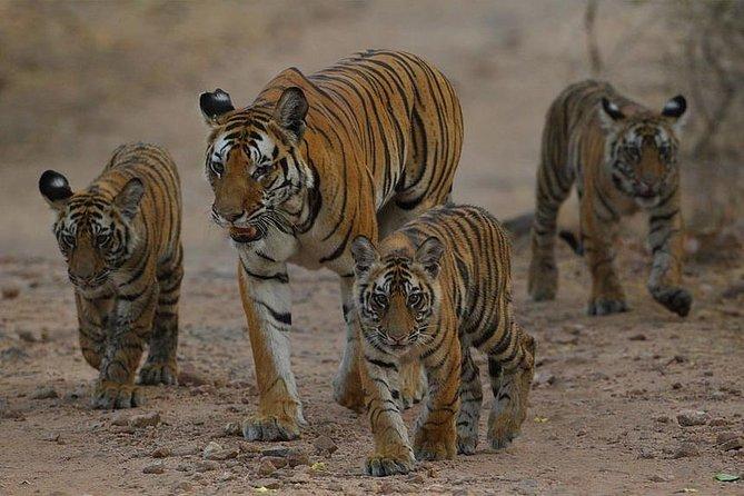 Private 4 Days Ranthambore National Park Safari Tour with Taj Mahal
