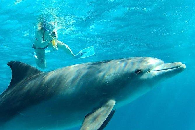 Dolphin House Trip