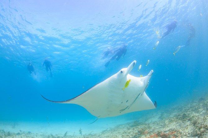 Marine Eco Safari - Swim with Manta Rays