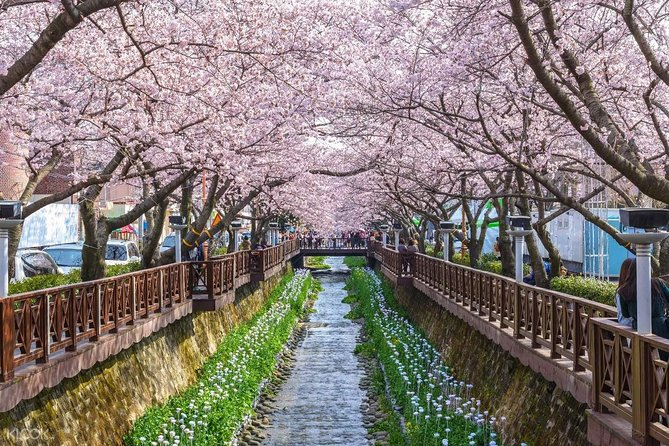 The Beauty of the Korea Cherry Blossom Discover 11days 10nights