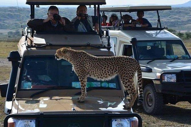 3 Days Game drive Tarangire, Lake Manyara and Ngorongoro crater National Park