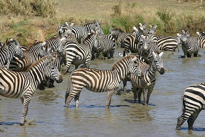 4 Days Northern Tanzania Wildlife Safari