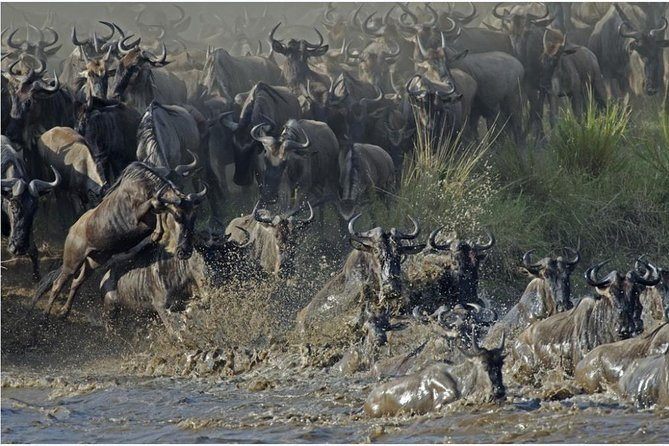 The Utmost Serengeti Wildebeest Migration and Big Five photo 1
