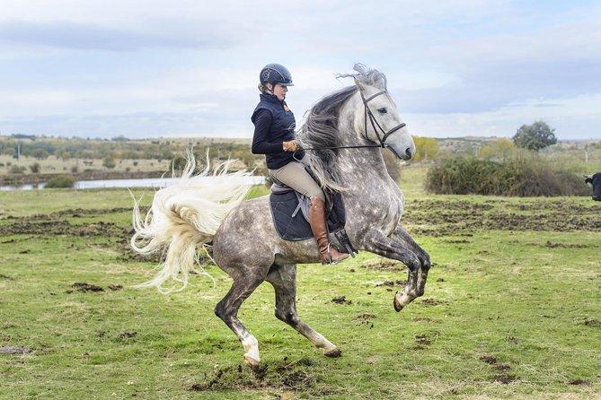 Segovia & Escorial: Horse Riding & Guided City Tour from Madrid