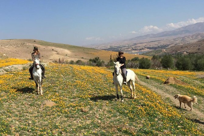 Quade bikes & Horse Riding in Tameslouht