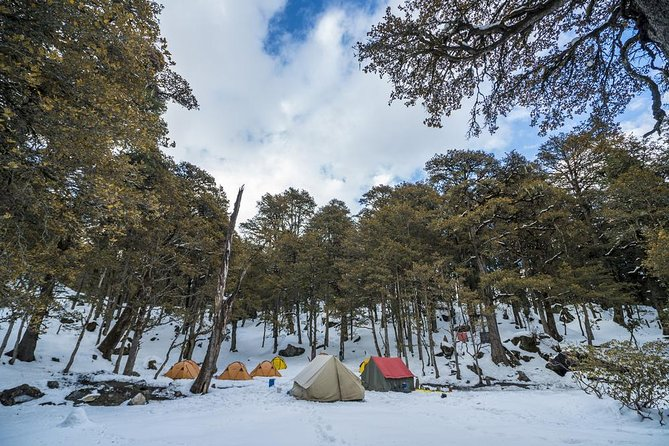 Kuari Pass Trek (Uttarakhand) - 6 Day Adventure