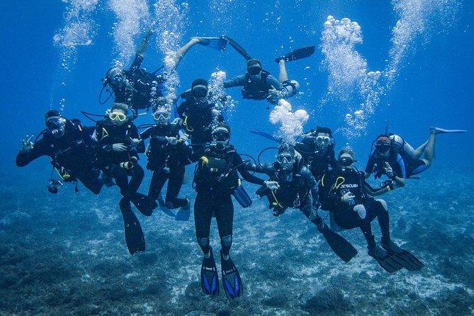 Fun diving Catalina islands