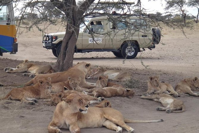 5 Days Special Safari to see migration photo 1