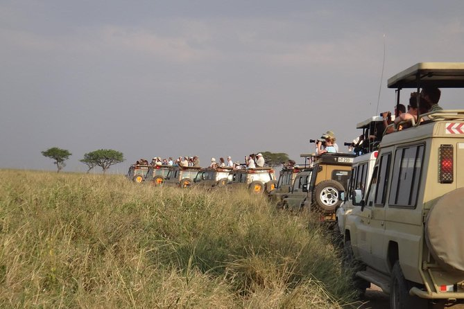 5 Days Special Safari to see migration photo 2