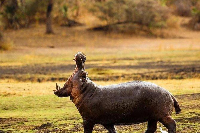 6 Days Budget Camping Safaris