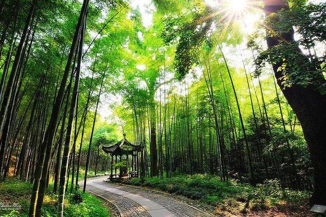 Meio-dia Hangzhou Yunxi bambu floresta e experiência de plantação de chá