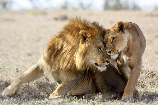 3-day Masai Mara Safari Tour to see the big five and wildebeest migration