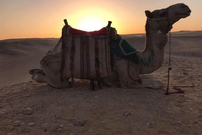 Camel Riding of Giza Pyramids at Sunset with Local Bedouin Dinner photo 1