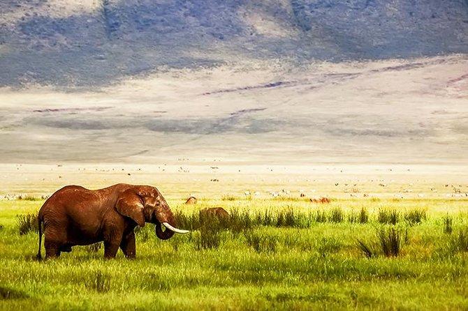 6-Day Visit Tarangire, Serengeti and Ngorongoro Crater