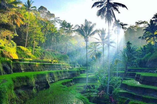 Private Ubud Village, Bali Swing and coffee luwak,waterfalls Day Tour