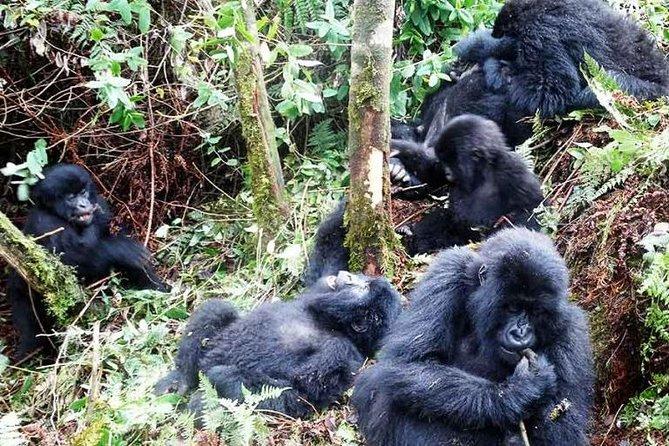 5 Days Gorillas And Game Safari