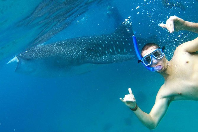Oslob Whaleshark and Moalboal (Pescador Island) with Tumalog Falls From Cebu