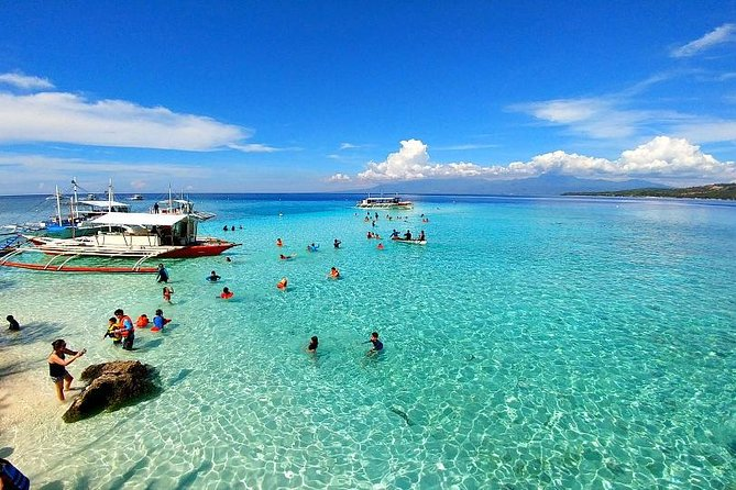 Cebu Whale Shark Watching And Sumilon Sandbar