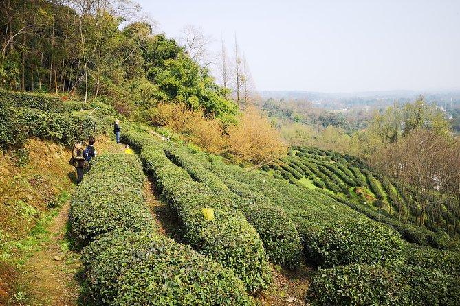Escape the City--Dujiangyan Panda Base Tour &Tea Plantation Walk
