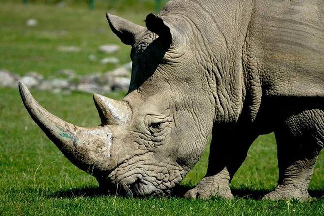 Rhino Walk and Culture, Livingstone
