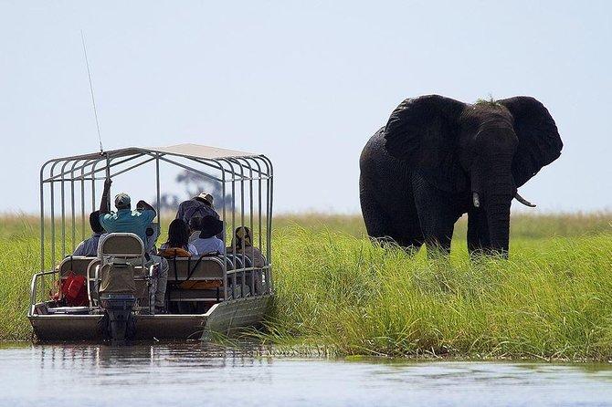 Chobe National Park Safari Full Day-trip