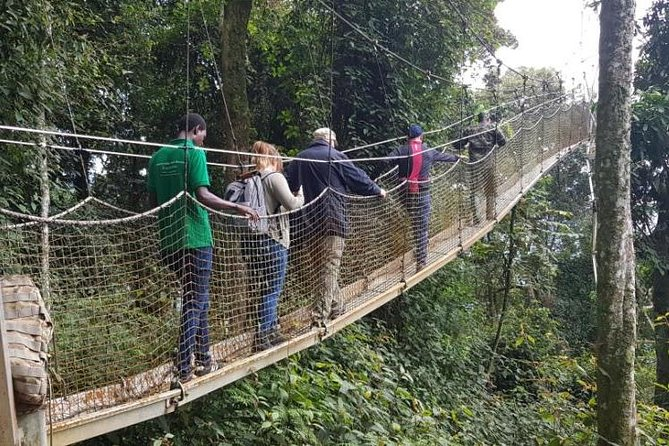 Two-day Nyungwe Canopy and Kivu Lake Adventure photo 1
