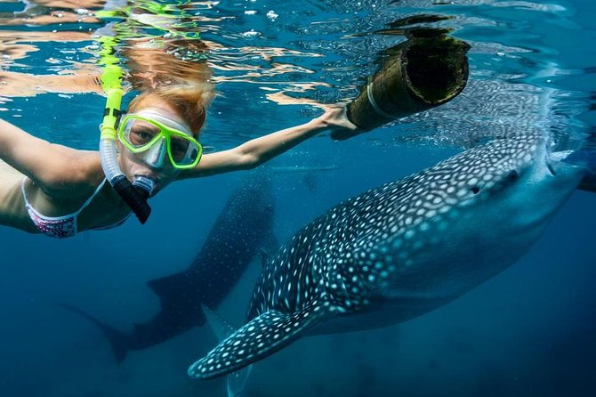 Oslob Whale Shark Snorkeling and Badian Canyoneering Adventure photo 1