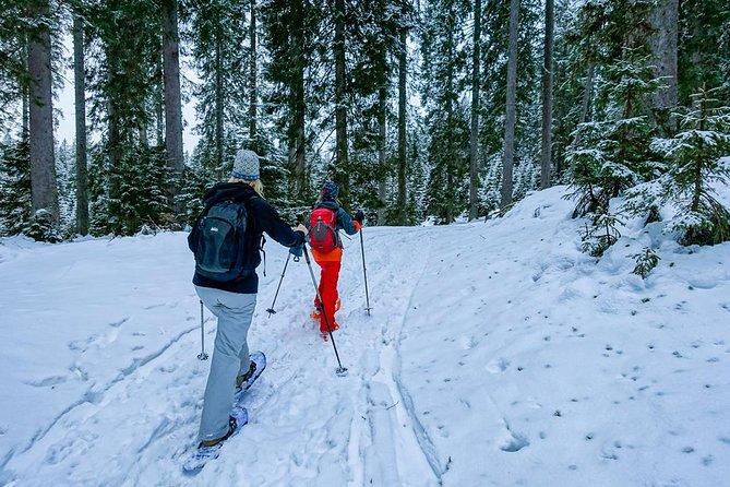 Snowshoeing in Triglav national park