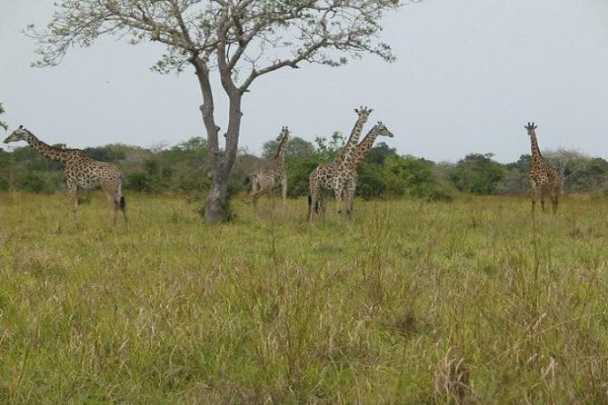 3 Days 2 Nights Mkomazi National Park photo 3