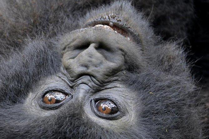 2 Days Gorilla Trekking With Canopy Walk At Nyungwe National Park